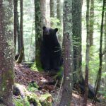 Bear Encounters Abound This Year
