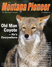 The Coyote, More Prolific Than Ever